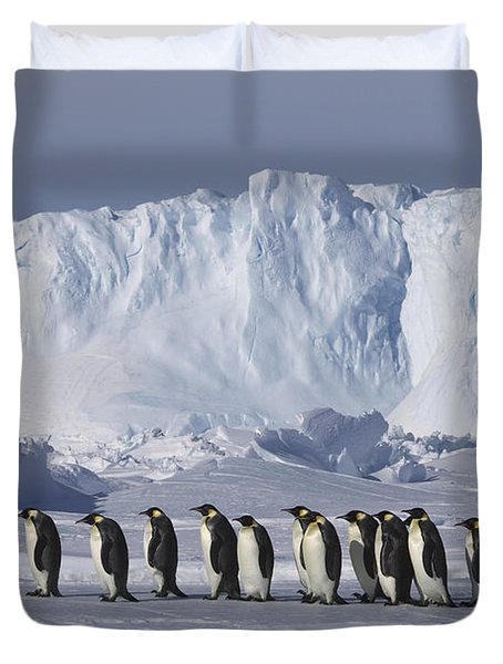 Emperor Penguins Walking Antarctica Duvet Cover by Frederique Olivier