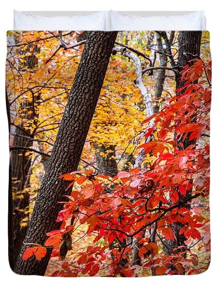 Fall In The Forest Duvet Cover by John Haldane