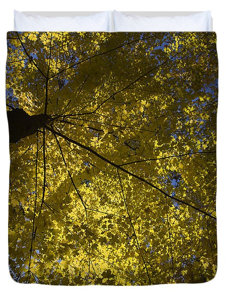 Fall Maple Duvet Cover by Steven Ralser