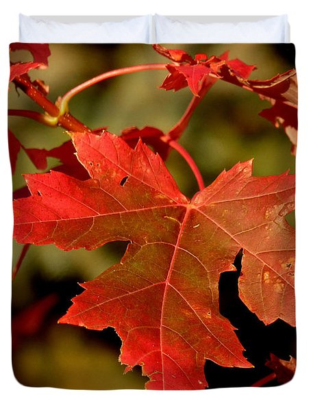 Fall Red Beauty Photograph By Lucinda Walter