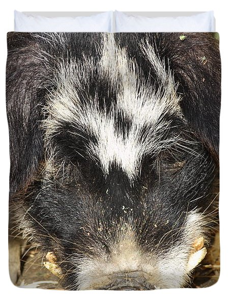Farm Pig 7D27361 Duvet Cover by Wingsdomain Art and Photography