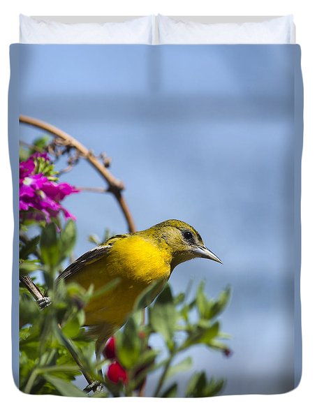 Female Baltimore Oriole In A Flower Basket Duvet Cover by Christina Rollo