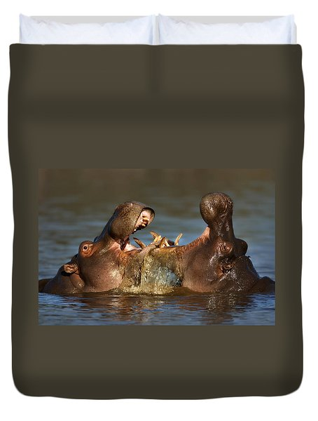 Fighting Hippo's Duvet Cover by Johan Swanepoel