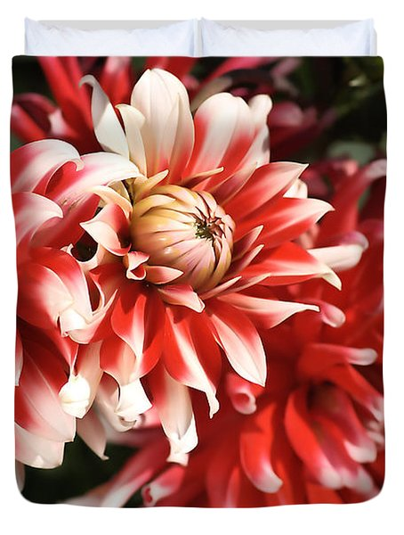 Flower-dahlia-red-white-trio Duvet Cover by Joy Watson