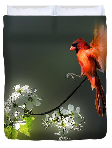 Flying Cardinal Landing On Branch Duvet Cover by Dan Friend