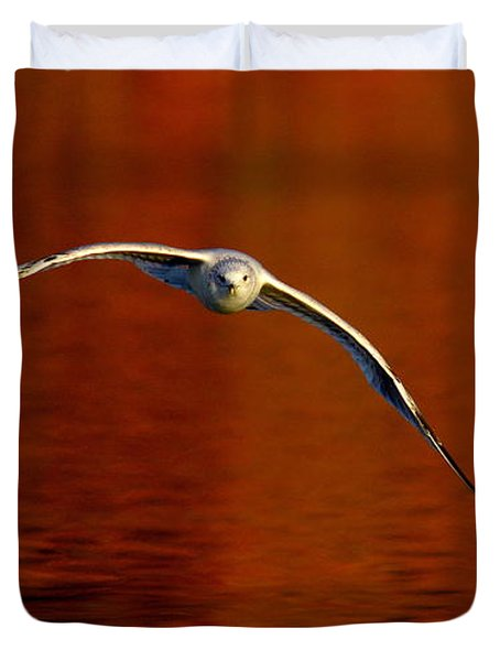Flying Gull On Fall Color Duvet Cover by Robert Frederick