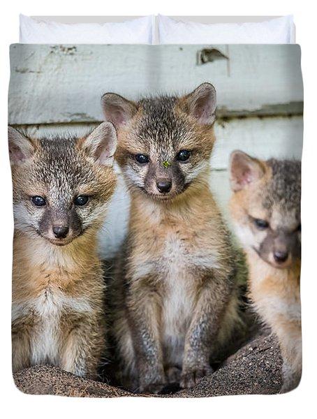 Four Fox Kits Duvet Cover by Paul Freidlund