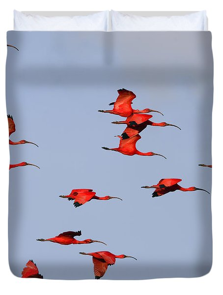 Frankly Scarlet Duvet Cover by Tony Beck