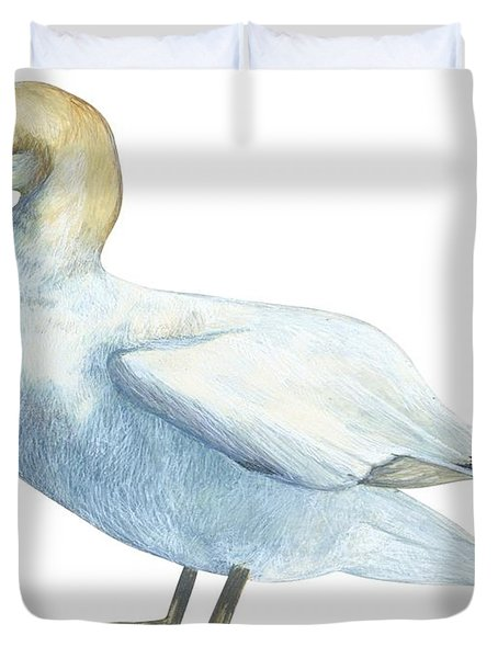 Gannet  Duvet Cover by Anonymous