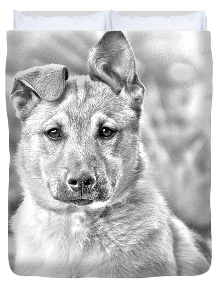 German Shepard Puppy Duvet Cover by James BO  Insogna