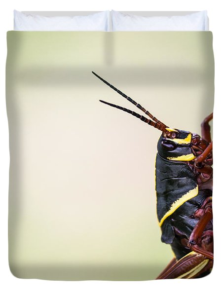 Giant Eastern Lubber Grasshopper Duvet Cover by Edward Fielding