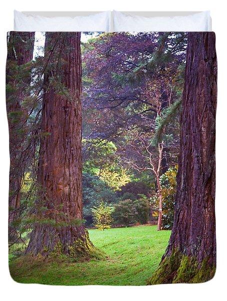 Giant Sequoias II. Benmore Botanical Garden. Scotland Duvet Cover by Jenny Rainbow