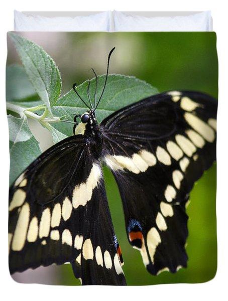 Giant Swallowtail Butterfly Duvet Cover by Saija  Lehtonen