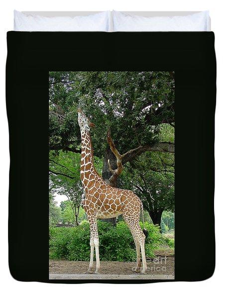 Giraffe Eats-09053 Duvet Cover by Gary Gingrich Galleries
