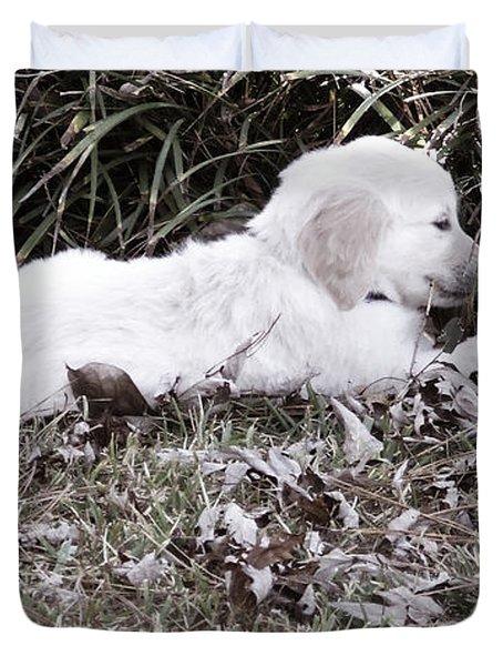Golden Retriever Puppy 2 Duvet Cover by Andrea Anderegg