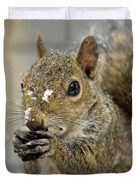 Gray Squirrel - D008392 Duvet Cover by Daniel Dempster