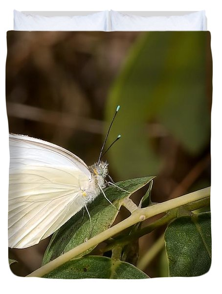 Great Southern White Butterfly Duvet Cover by Rudy Umans