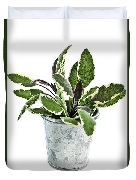 Green sage herb in small pot Duvet Cover by Elena Elisseeva