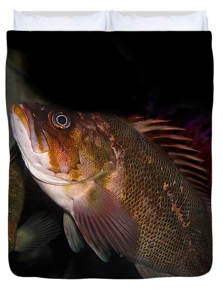 Gruper Fish 5d24129 Duvet Cover by Wingsdomain Art and Photography