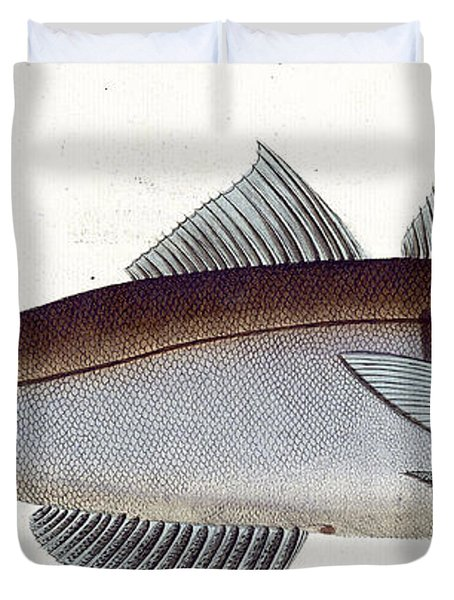Haddock Duvet Cover by Andreas Ludwig Kruger