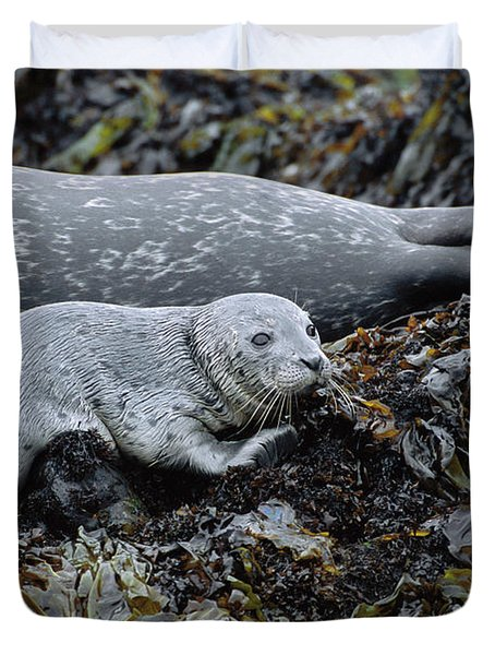 Harbor Seal Pup Resting Duvet Cover by Suzi Eszterhas