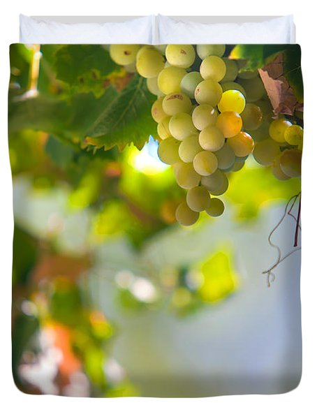 Harvest Time. Sunny Grapes V Duvet Cover by Jenny Rainbow