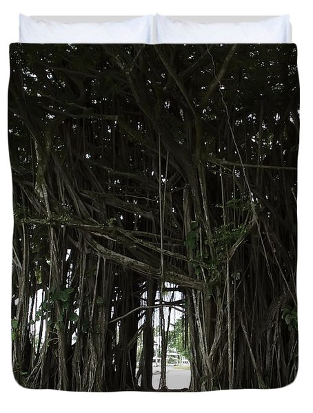 Hawaiian Banyan Tree - Hilo City Duvet Cover by Daniel Hagerman