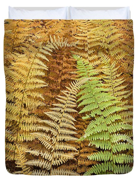 Hay-scented Ferns Duvet Cover by Alan L Graham