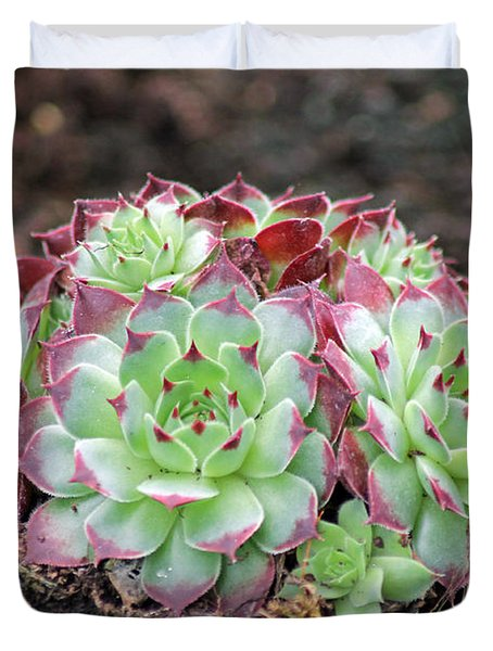 Hen and Chicks Duvet Cover by Tony Murtagh
