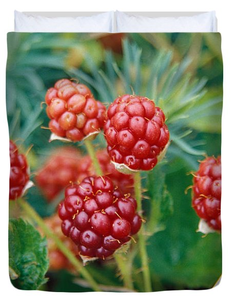 Highbush Blackberry Rubus Allegheniensis Grows Wild In Old Fields And At Roadsides Duvet Cover by Anonymous