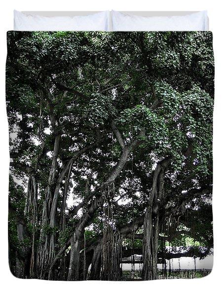 Honolulu Banyan Tree Duvet Cover by Daniel Hagerman