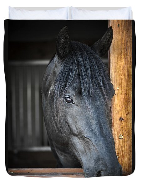 Horse In Stable Duvet Cover by Elena Elisseeva