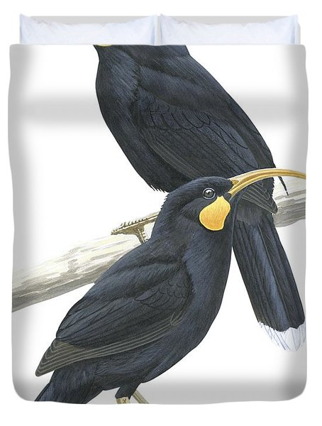 Huia Duvet Cover by Anonymous