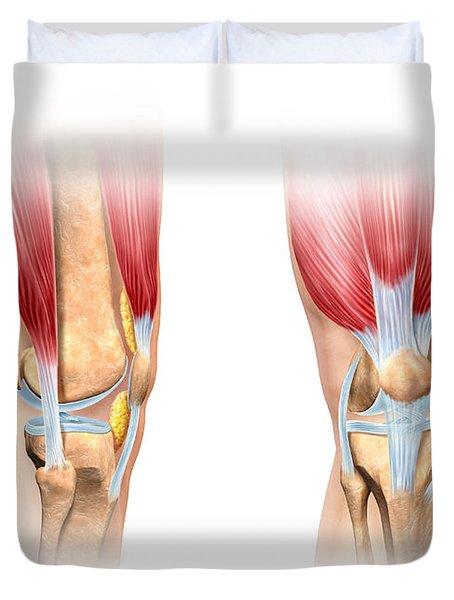 Human Knee Cutaway Illustration Duvet Cover by Leonello Calvetti