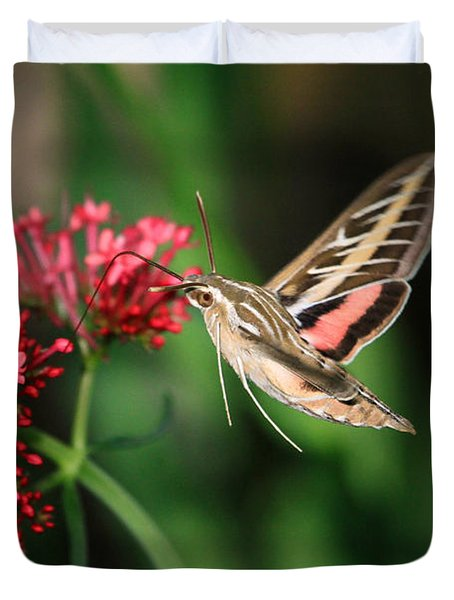 Hummingbird Moth Duvet Cover by Donna Kennedy
