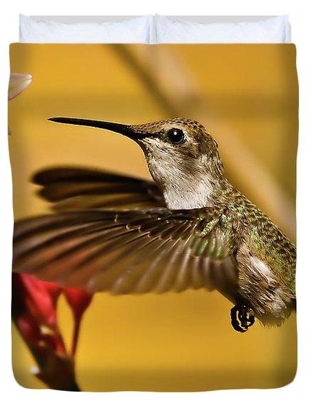 Hummingbird Duvet Cover by Robert Bales