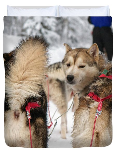 Husky dogs pull a sledge  Duvet Cover by Lilach Weiss