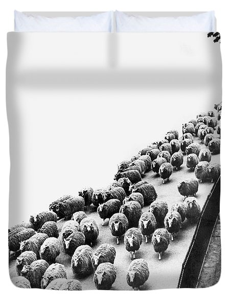 Hyde Park Sheep Flock Duvet Cover by Underwood Archives