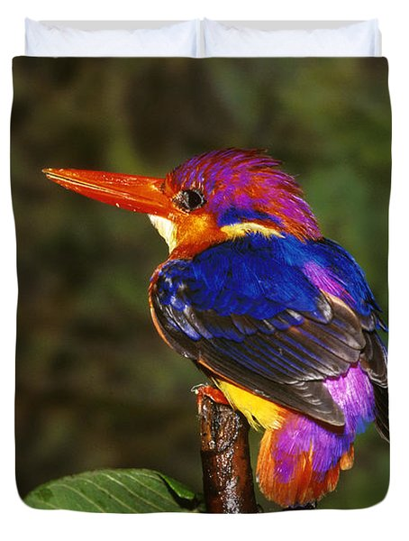 India Three Toed Kingfisher Duvet Cover by Anonymous