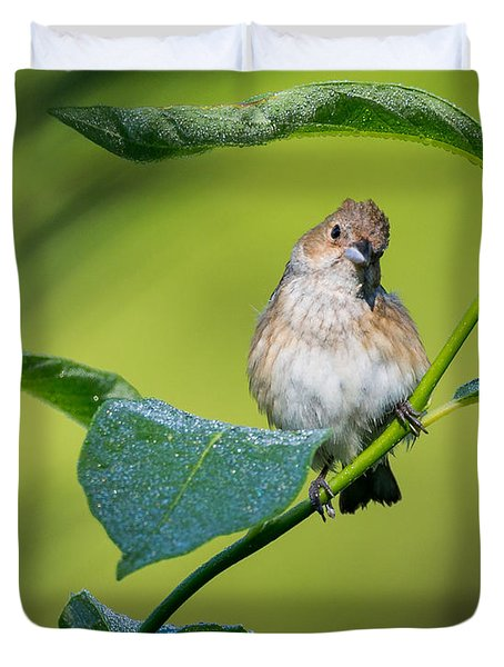 Indigo Bunting Female Duvet Cover by Bill Wakeley