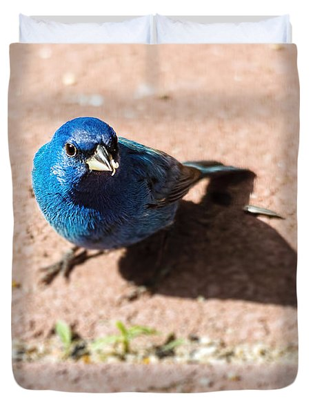 Indigo Bunting Duvet Cover by Jon Woodhams