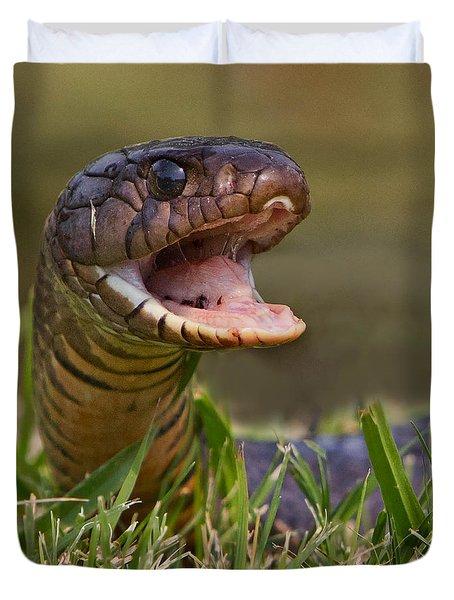 Indigo Snake Photograph By Jerry Fornarotto border=