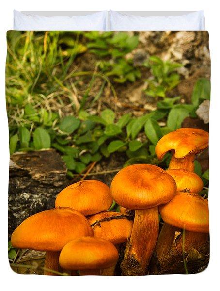 Jack Olantern Mushrooms 22 Duvet Cover by Douglas Barnett