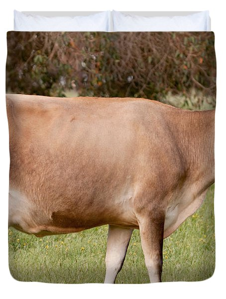 Jersey Cow In Pasture Duvet Cover by Michelle Wrighton