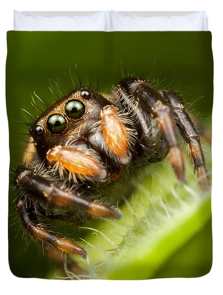 Jumping Spider Phidippus Clarus I Duvet Cover by Clarence Holmes