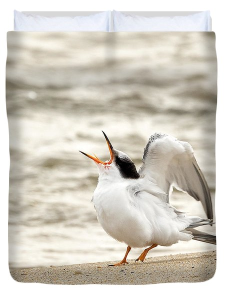 Juvenile Common Tern Square Duvet Cover by Bill  Wakeley