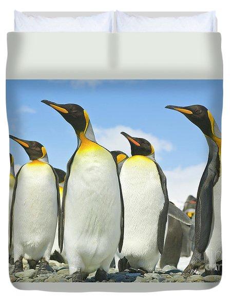 King Penguins Looking Duvet Cover by Yva Momatiuk John Eastcott