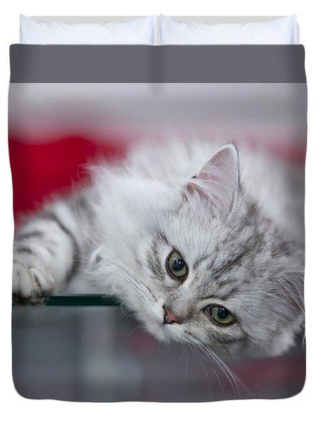 Kitten Duvet Cover by Melanie Viola
