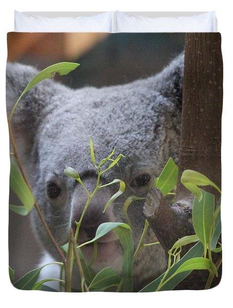 Koala Bear  Duvet Cover by Dan Sproul