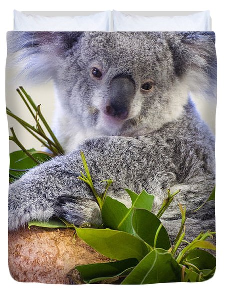 Koala On Top Of A Tree Duvet Cover by Chris Flees